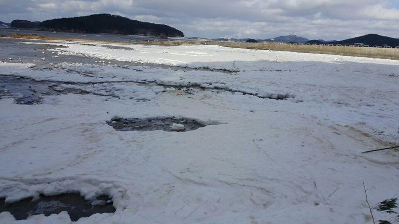 충남 서산과 태안 경계인 가로림만 앞바다가 강추위에 얼어붙으면서 어선들의 발이 묶였다. [사진 서산시]