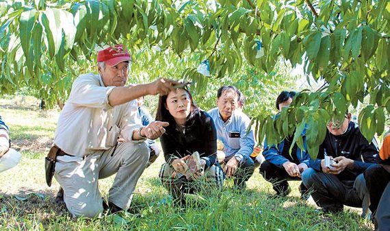 복숭아사랑동호회는 온·오프라인을 통해 고품질 복숭아 생산을 위한 핵심 재배기술을 공유함으로써 복숭아산업 발전에 기여하고 있다. 사진은 일본 선진 영농 연수 장면. [사진 한광호기념사업회]