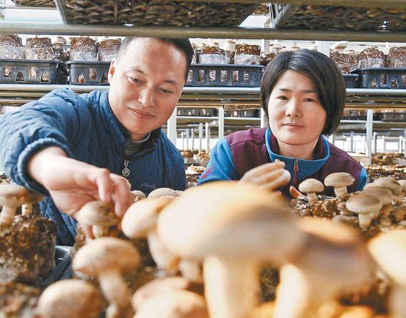 조해석 대표(왼쪽)와 부인 서강화 씨. 표고버섯 대량생산 방식 개발로 국내 표고버섯 시장에 안정적 공급이 가능하게 됐다. [사진 한광호기념사업회]