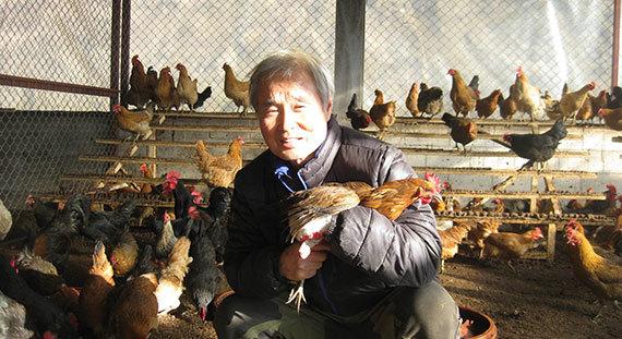 토종닭 1만여 마리를 산기슭에 풀어놓고 키우는 경기도 남양주시 고센농장. 송재문 생산부장이 종계장에서 알을 낳는 어미닭을 살펴보고 있다. [남양주=전익진 기자]