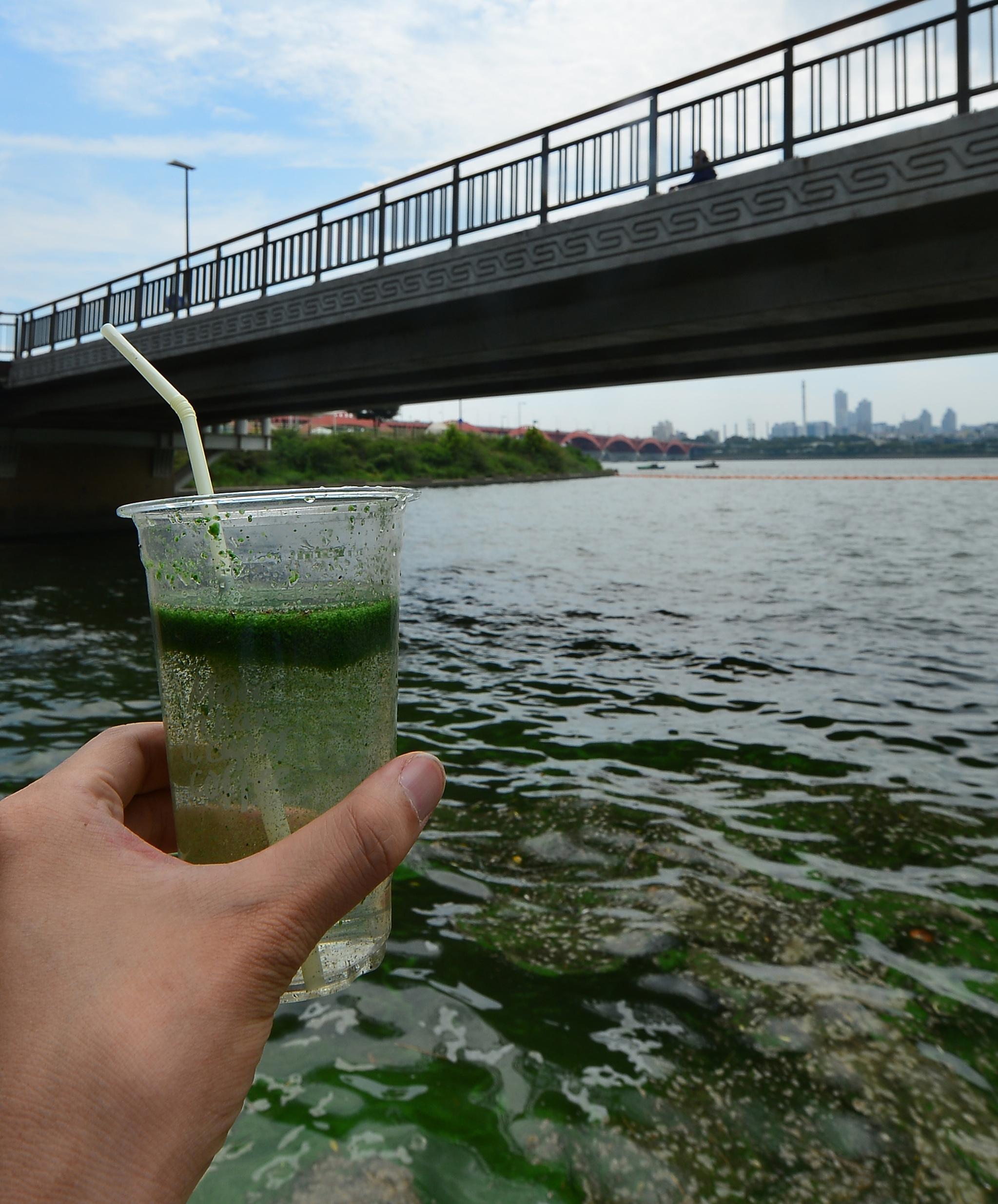 서울시 마포구 홍제천교 부근 한강변이 녹조현상으로 오염되어 있다. [중앙포토]