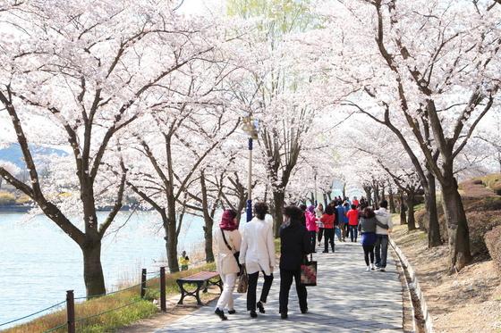 활짝 핀 벚꽃에 둘러싸인 경북 경주시 보문호수 주변을 사람들이 걷고 있다. [사진 경주시]