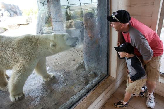 북극곰을 볼 수 있는 토론토 동물원.[사진 캐나다관광청]