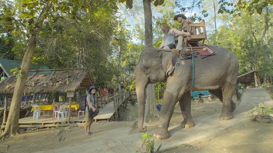 탓새폭포 주변에서 여행객을 대상으로 하는 코끼리투어.