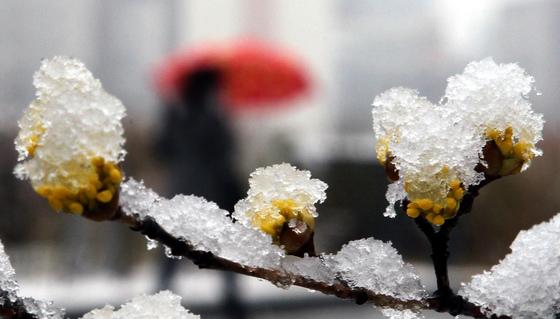 이번 주말 전국에 봄비가 오락가락 하겠고, 강원 산지와 경북 북부 산지에는 많은 눈이 내리겠다. [중앙포토]