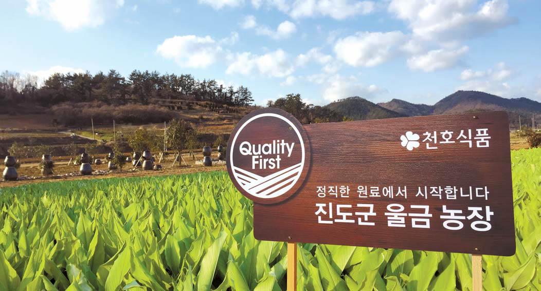 천호식품이 전남 진도군과 원료 수급 계약을 체결해 운영하고 있는 울금농장 모습. [사진 천호식품]