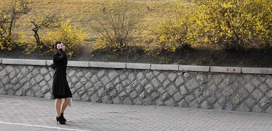 북한이 탄도미사일을 동해로 쏘기 하루전인 4일 평양시내는 여느날과 다름없었다.완연한 봄날씨를 보인 4일 오후 평양의 한 시민이 노란색 개나리가 핀 길을 걸어가고 있다.평양=사진공동취재단