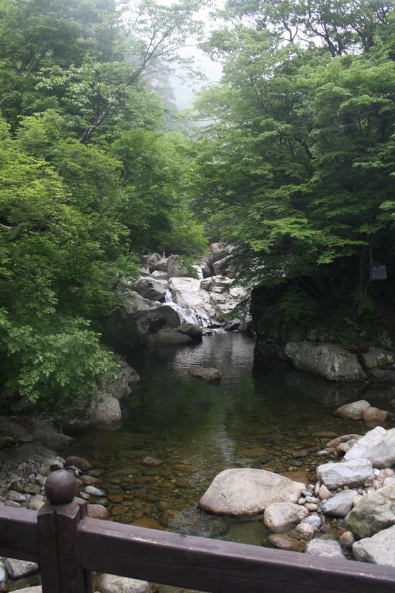 지리산 칠선계곡의 여름 모습. [사진 국립공원관리공단]