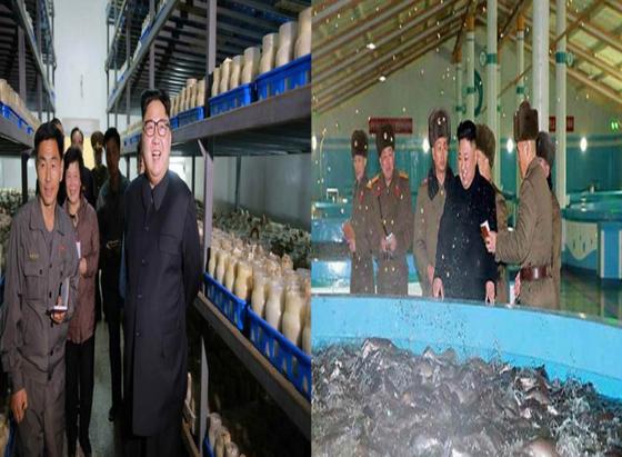 김정은 북한 노동당 위원장이 지난 7일 평양버섯공장을 현지지도했으며(사진 왼쪽) 이에 앞서 지난 2월 21일 삼천메기공장을 찾았다. [사진 노동신문]