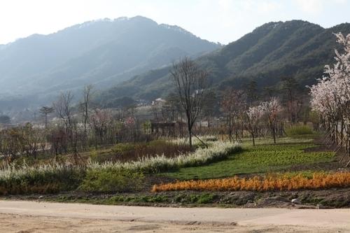 국립백두대간수목원 꽃나무원내 봄 풍광 [사진 산림청]