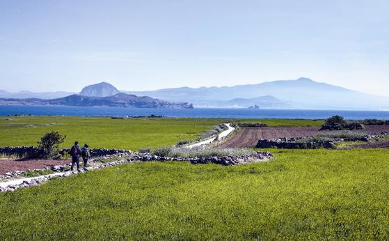제주도 남서쪽에 있는 작은 섬, 가파도에는 지금 청보리가 무르익었다. 맑은 날이면 바다 건너 용머리해안과 산방산, 한라산이 한눈에 들어온다. [중앙포토]