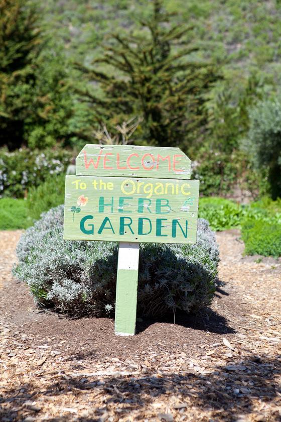 농장 혹은 텃밭에서제철 체소를 바로 가져다 먹는 '팜 투 테이블' 문화는 미국 캘리포니아에서 확산했다. 1960년대 히피들이 주도한 문화다.