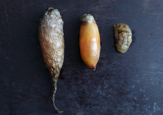 미더덕은 그물에 열매처럼 매달린다. 껍질을 까기 전(왼쪽) 미더덕과 껍질을 벗긴 미더덕(가운데) 모습. 오른쪽은 육지 사람이 흔히 미더덕으로 알고 먹는 오만둥이다.