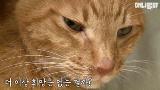 2014년 SBS '동물농장' 방송 당시 준팔이의 모습. [사진 SBS]