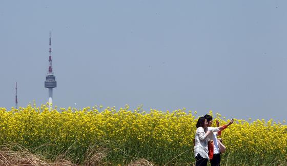 한강변을 물들이는 유채 축제가 한창이다. 사진은 서울 서래섬 유채꽃축제 모습. [중앙포토]