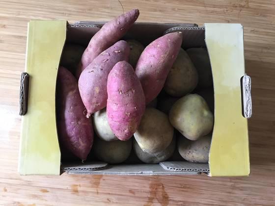 쉽게 싹이 나거나 곰팡이가 펴 보관하기 힘든 감자와 고구마.