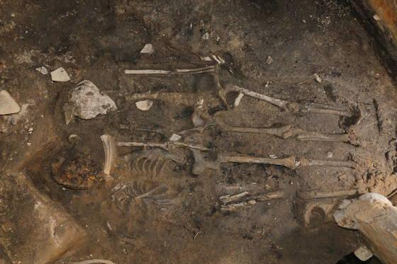 성벽 공사 중에 사람을 제물로 사용한 삼국시대 신라인의 풍습을 보여주는 유골이 경주 월성유적지에서 처음 발굴됐다. [사진 문화재청]