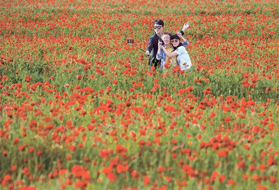경남 하동 북천면에 펼쳐진 전국 최대 규모의 꽃양귀비밭. 물감으로 채색한 듯한 풍광을 보면 누구나 들뜬다. 꽃양귀비 축제가 21일까지 진행된다.
