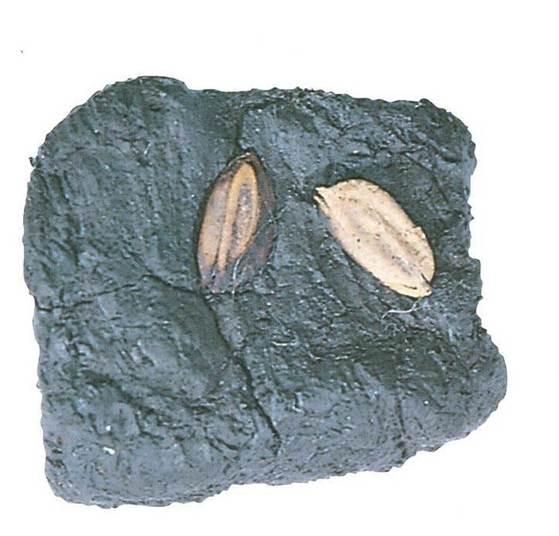 1998년 충북 청주시 흥덕구 옥산면 소로리에서 발견된 '청주 소로리 볍씨' [사진 한국선사문화연구원]