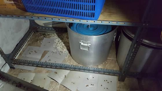 경기 화성시의 한 요양병원 식품 창고. 쥐 배설물과 쥐를 잡기 위한 끈끈이가 곳곳에 놓여 있다. [사진 경기도]