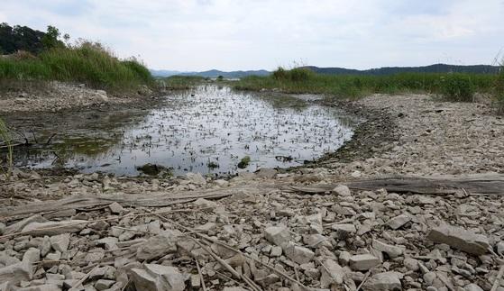 극심한 봄 가뭄으로 물이 말라 바닥이 드러난 충남 당진의 대호지. [사진 충남도]