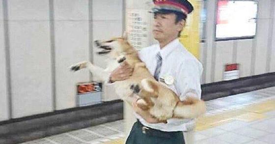 역무원에게 붙잡힌 시바견[사진 이하 로켓뉴스24]