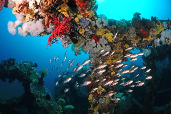해양수산부는 바다목장과 인공양식 등으로 어획량 감소와 바다 사막화 위기를 해소하고 있다. 사진은 경북 영덕 해저에 건설된 바다목장. [사진 해양수산부]