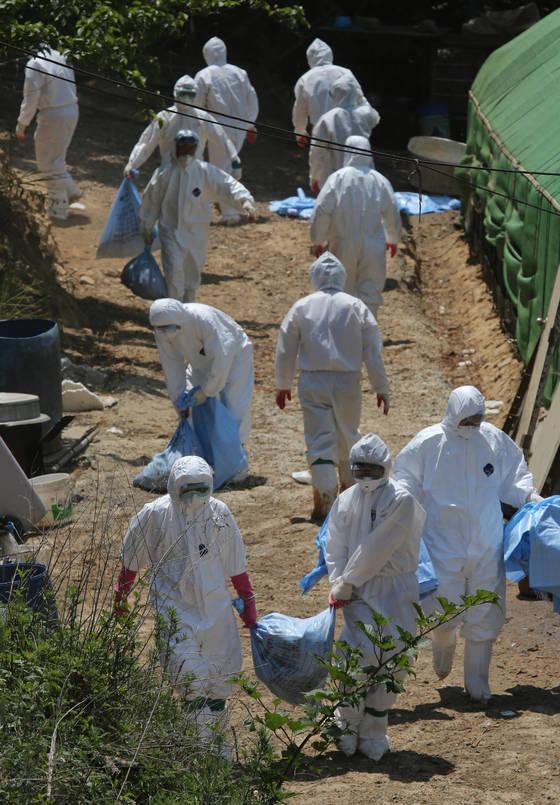 5일 방역대원들이 AI 양성반응이 나온 부산 기장군의 한 농가에서 살처분을 하고 있다.부산 기장군의 고병원성 조류인플루엔자(AI) 의심 농가에서 키우던 닭과 오리 4천228마리가 모두 살처분됐다.송봉근 기자