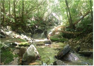 열목어 복원대상지인 정선 물한리 계곡. [사진 환경부]