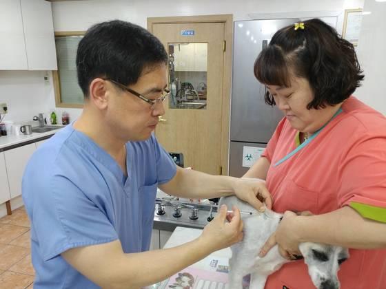 7일 오후 수원 두리동물병원 성낙현 원장이 반려견에게 백신을 접종하고 있다. 김민욱 기자