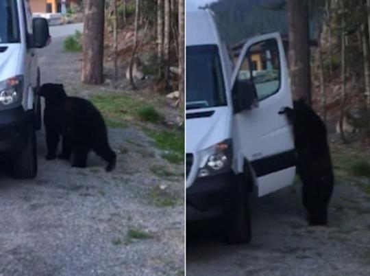캐나다 브리티시컬럼비아 지역에서 곰 한 마리가 차량 문을 열고 있다. [매티 패터슨 페이스북 캡쳐]