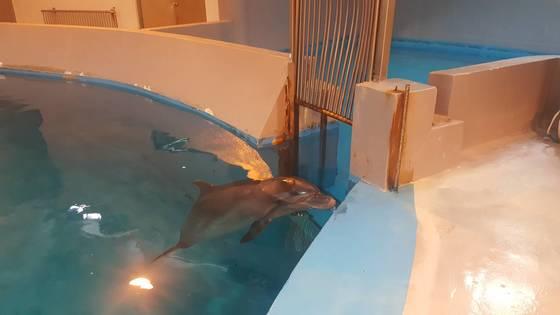태지는 돌고래 금등과 대포가 떠난 후 서울대공원의 유일한 돌고래가 됐다.[사진 서울대공원]