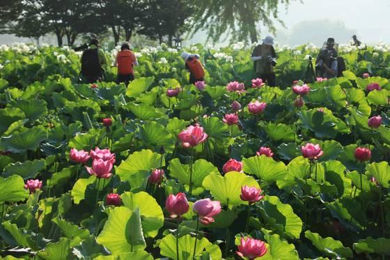 지난해 여름 세미원에서 열린연꽃 문화제 모습. [사진 세미원]