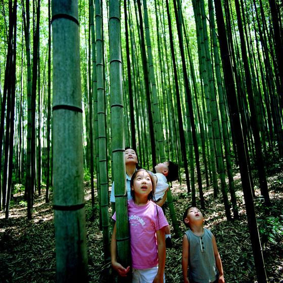 담양대나무골테마공원에서 죽림욕을 즐기는 가족 여행객.[중앙포토]