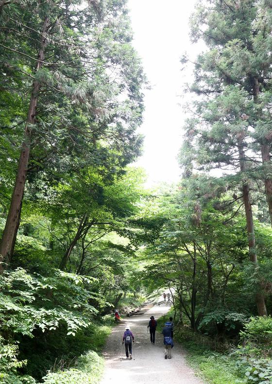 장성 축령산 편백치유의 숲을 찾은 방문객들이 피톤치드를 마시며숲길을 걷고 있다. 프리랜서 장정필