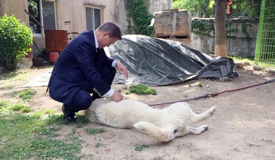 문재인 대통령이 지난5월 양산 사저에 도착해 사저 마당에 있는 마루를 만지고 있다.[중앙포토]