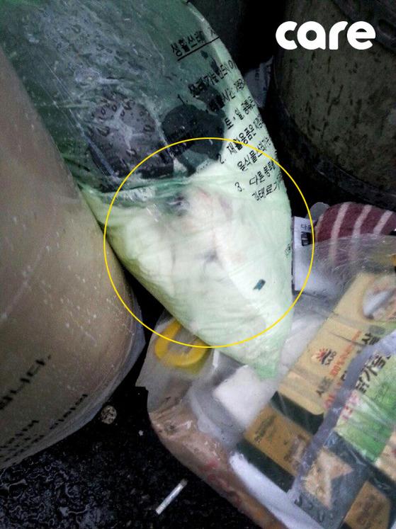 지난 4월 부천의 한 전봇대 앞에서 쓰레기 봉투에 담긴채 발견된 희망이. [사진 동물권단체 케어]