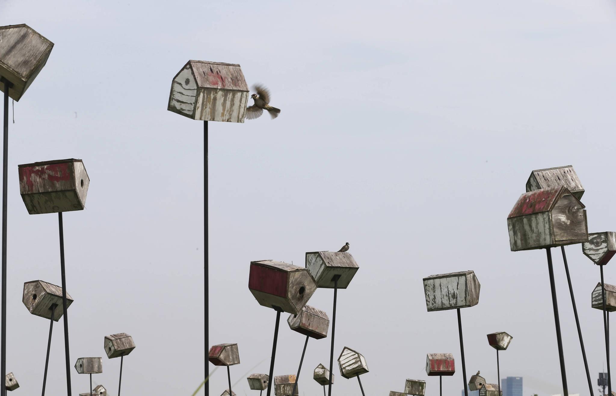서울 마포구 상암동 하늘공원에 있는 참새집에 참새들이 드나들고 있다. 신인섭 기자