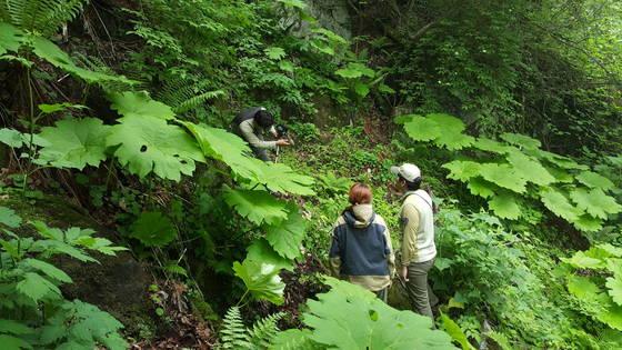 설악산국립공원에서 개병풍 서식지를 조사하는 모습. [사진 국립공원관리공단]