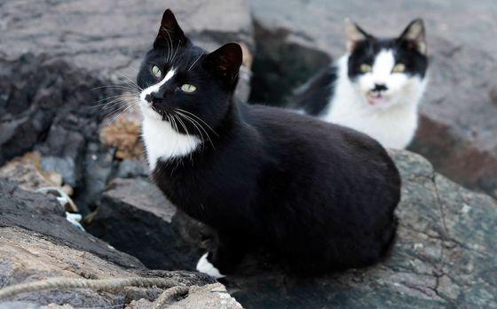 고양이 [중앙포토]