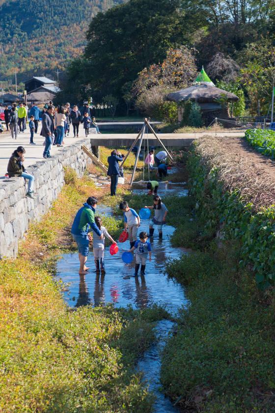 고성왕곡마을 민속체험축제 참가자들이 미꾸라지를 잡고 있다. [사진 고성군]