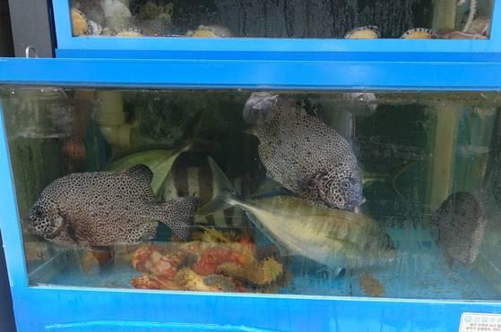 노량진수산시장에서 바로 횟집에 도착한 활어들. 점박이 강당돔(배달한 사람은 '범돔'이라 함) 3마리, 줄무늬 돌돔 1마리, 날렵한 유선형의 줄전갱이 3마리가 왔다.