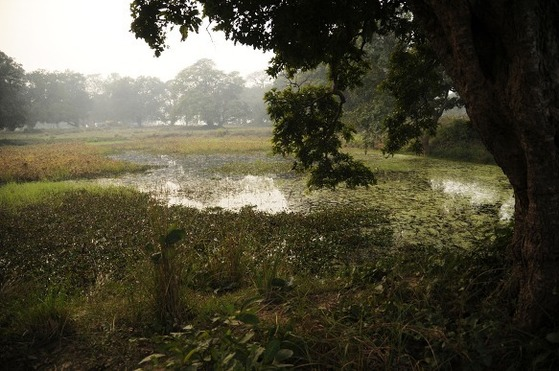 네팔 영토에 있는 카필라 성에는 커다란 연못이 있다.