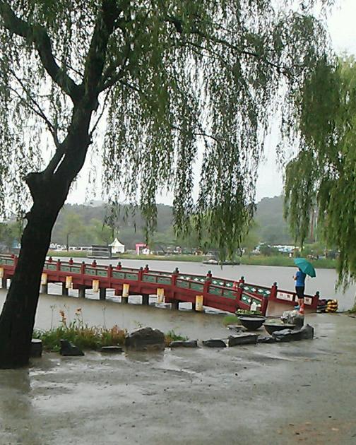 한때 시간당 50㎜ 넘는 폭우가 쏟아진 8일 충남 부여 궁남지에서 한 주민이 우산을 받쳐 들고 다리 너머를 바라보고 있다. 2017.7.8  walden@yna.co.kr(끝)<저작권자(c) 연합뉴스, 무단 전재-재배포 금지>