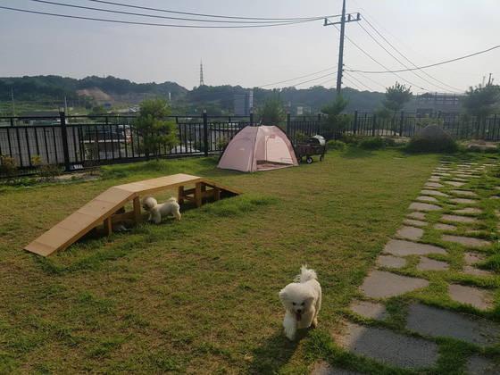 강원도 춘천시 만천리에 있는 애견호텔 잔디밭에서 산책을 하는 애견들. 박진호 기자