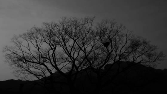 포월침두(抱月枕斗)가 있는 경남 거창 보해산 자락을 배경으로 선 용산리 느티나무의 모습. 포월침두 주인이 귀촌 첫날 카메라에 담았다. [사진 조민호]