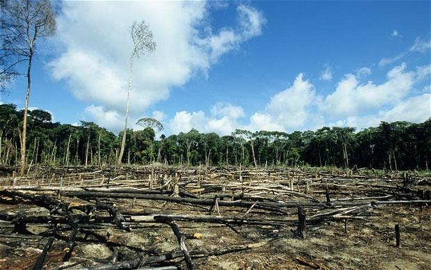 매주 4명이 살해된다...위협 받는 환경운동