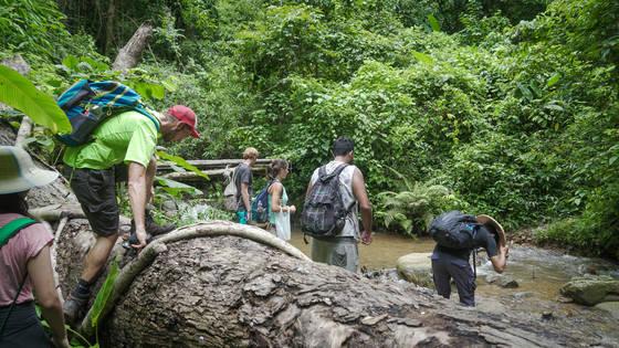 울창한 정글을 헤치며 걸어야 하는 히포 트레킹.