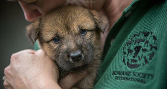 국제 동물보호단체 '휴메인 소사이어티 인터내셔널'(HSI)은 지난 20일 복날을 앞두고 국내 개농장에서 도살 위기에 처한 개 149마리를 구조했다. [사진 HSI]