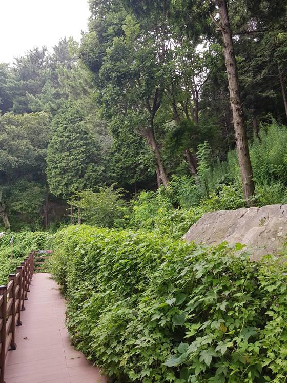이바구캠프 바로 뒤쪽 편백 숲으로 가는 길. 황선윤 기자